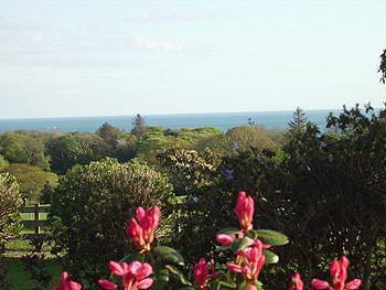 Sea View Pink Flowers And Garden[1]